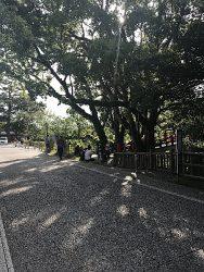 岡崎公園歩道